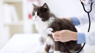動物病院で健康診断